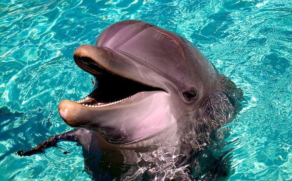 Singularidades extraordinárias de animais extraordinários: Vários