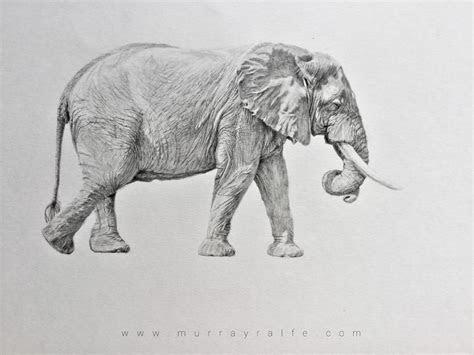 pencil drawings murray ralfe art