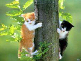 Papel de parede 'Gatos na Árvore'