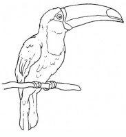 Disegni Da Colorare Animali Ovipari Coloratutto Website