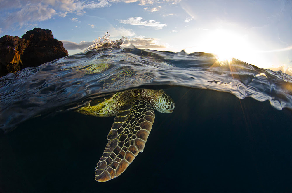 Smithsonian Magazine Announces 11th Annual Photo Contest Finalists travel nature