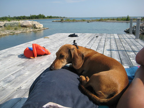 Flynn chillaxes at the cottage, Lake Huron, ON
