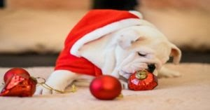"""Survey Reveals All The Ways Our Dogs """"Ruin"""" The Holidays"""