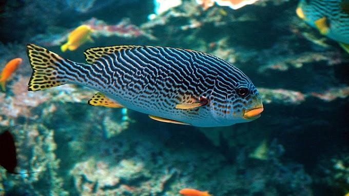 Las principales causas del estrés en los peces