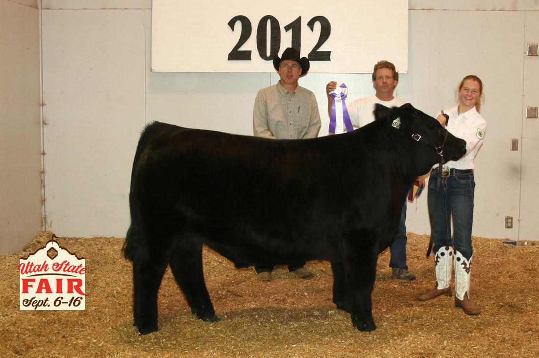 Utah State Fair Champion Steer