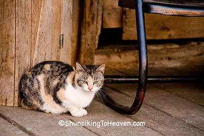 Calico Cat on the Porch of Penn's Store, Casey County, Kentucky (at the Boyle County Line)