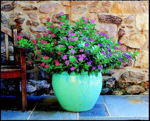 New to Gardening? Here are some Great Tips…