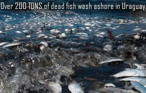 200 Tons of dead fish in Uraguay
