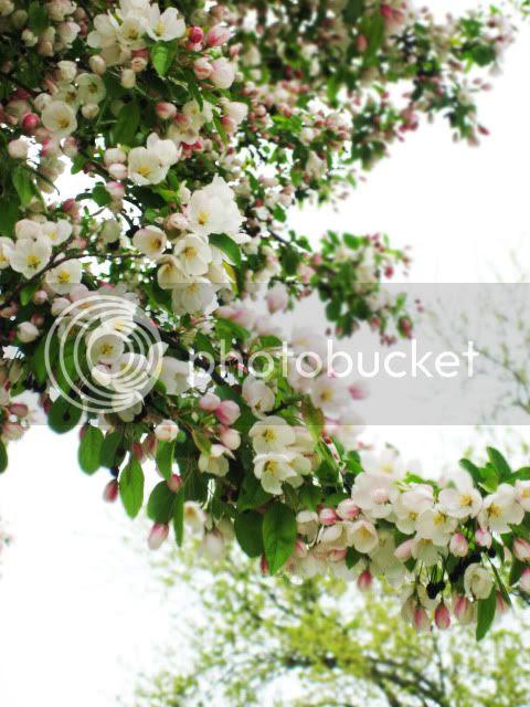 spring 2010 flowers