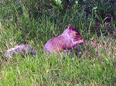 Squirrel_709