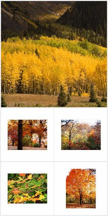 Autumn Season Cards / Postage