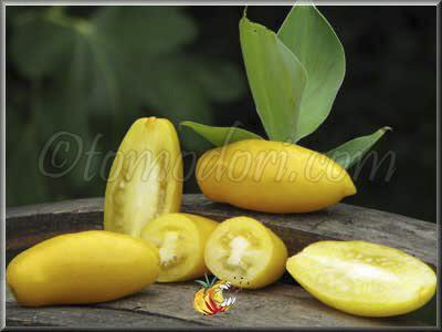 http://tomodori.com/images/Tomates/banana_legs_3.jpg