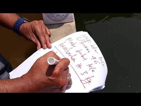 Berapa kali pemberian pakan ikan LELE dalam 1 hari?