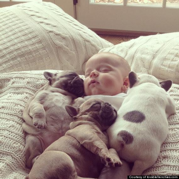 baby and bull dog