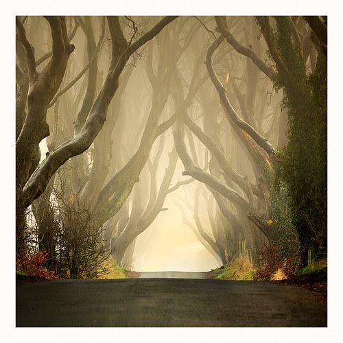 The Dark Hedges .II  (2011) por Klarens