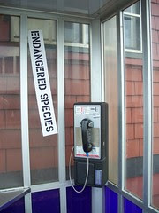 shhh....we've encountered a payphone in it's unnatural environment