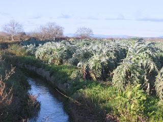canales del Ega