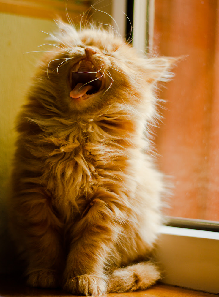 Bumble yawn