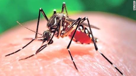 فيروس زيكا اعراض فيروس زيكا علاج فيروس زيكا