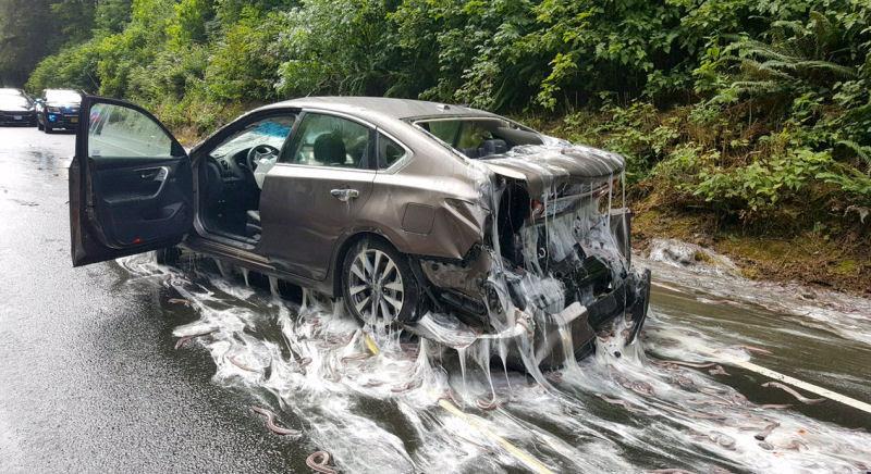 Isto é o que acontece quando um caminhão cheio de peixes-bruxa tomba ao seu lado na estrada 01