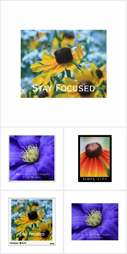 Wildflowers for Your Walls by Nature's Folio