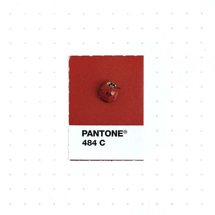 parejas-objetos-cotidianos-muestras-color-pantone-pms-inka-mathews (4)