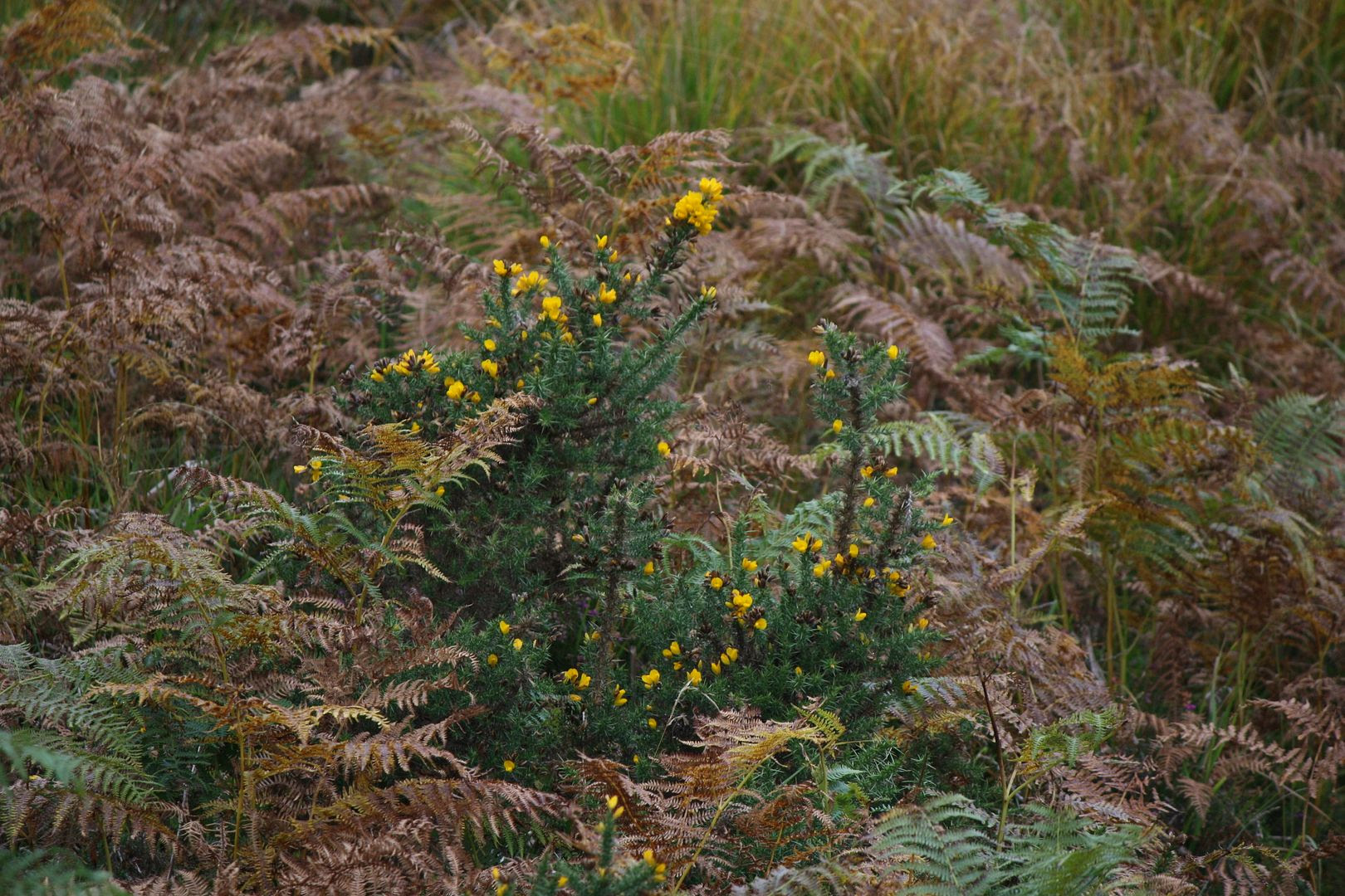 Wildflowers in Glendalough, Ireland photo IMG_3969_zpsclmtgltx.jpg