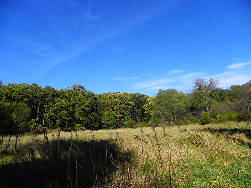 Autumn in Swallow Cliff Woods (Cook County Forest Preserve), Palos Park, IL  (39)