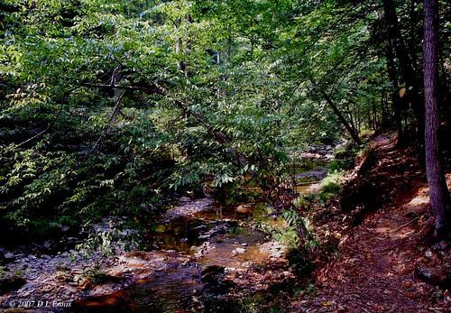 Trailing the Creek