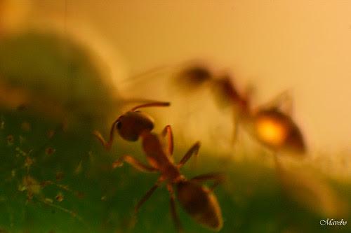 El mundo de las hormigas by Alejandro Bonilla