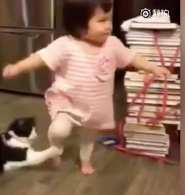 Evil cat deliberately trips up toddler