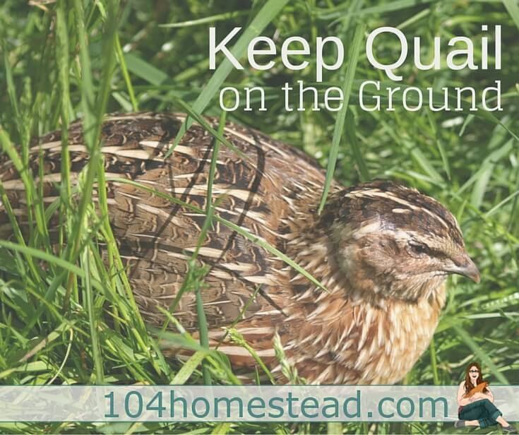 11+ Raising Quail Backyard Background - HomeLooker