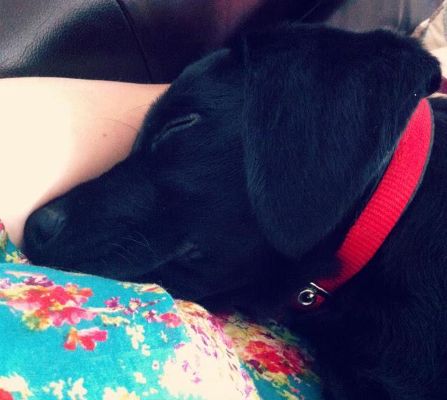 14 dog puppy blog.