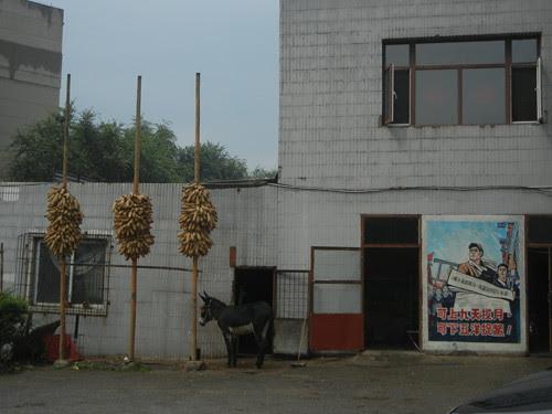 DSCN0164 _ Restaurant, Shenyang, September 2013