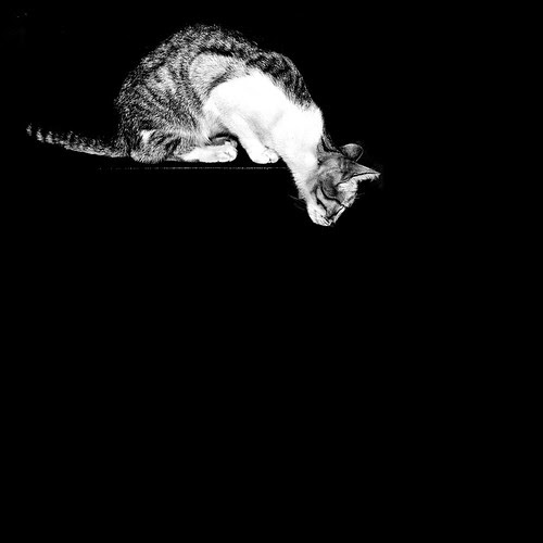 cat in the dark ( hunting ) por Paulo Lucic