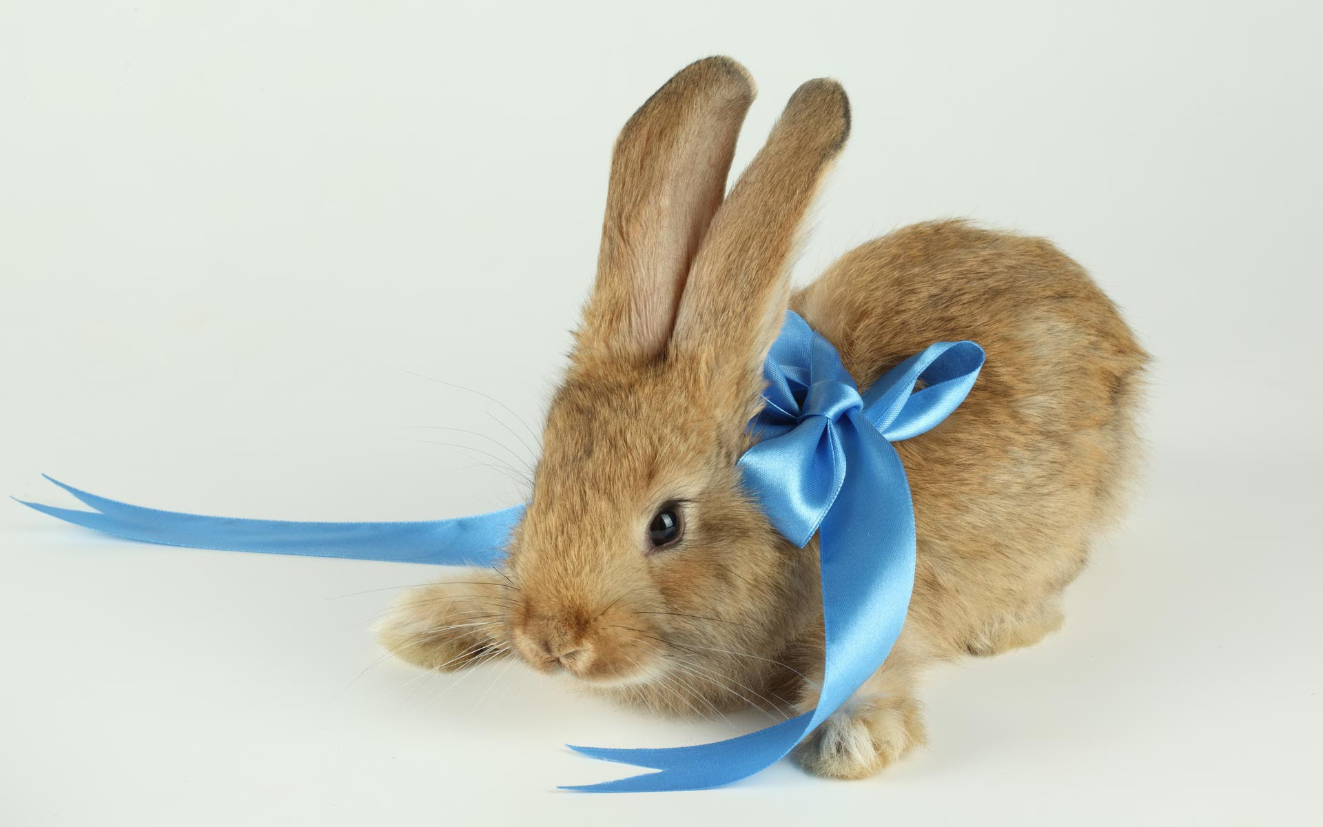Bunny Wallpapers High Quality | Download Free