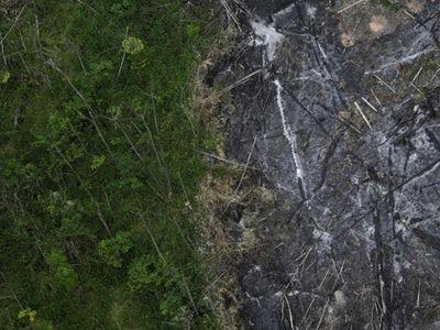 Parte de la selva virgen del Amazonas talada y quemada. REUTERS