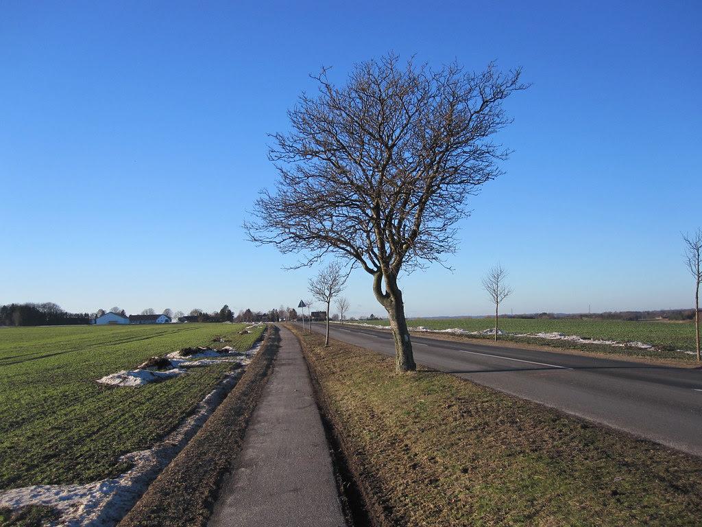 Tree between Gadstrup and Ramsømagle