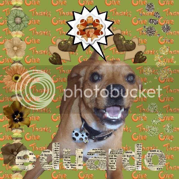 Dog,Pug,Talking Turkey