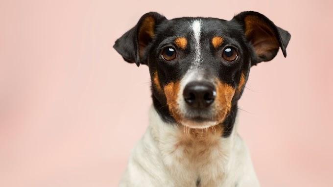¿Por qué el perro tiembla? Causas y posibles enfermedades