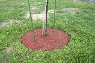 Building A House Rubber Mulch Tree Ring