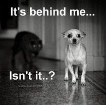 Funny Scared Dog Caption Picture