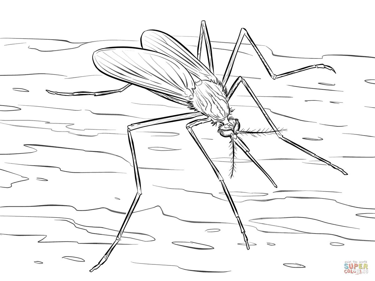 Dibujo De Mosquito De Las Ventanas Para Colorear Dibujos Para