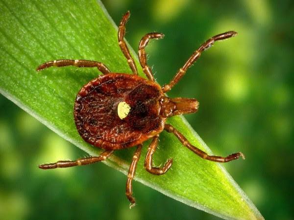 Chỉ cần một vết cắn của con bọ này bạn sẽ biến thành người ăn chay - Ảnh 1.