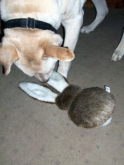 Zeus_Rabbit_Play_3711e