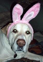 Zeus_bunny_411h