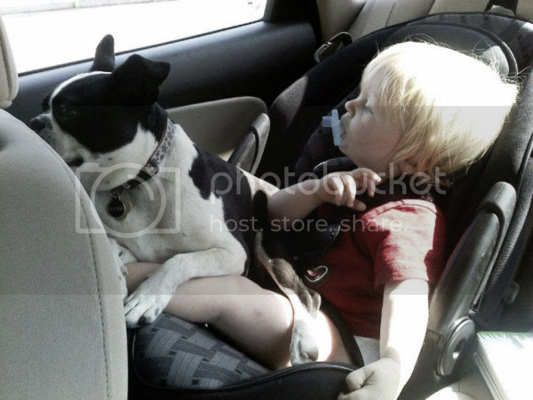 Rockie and Jace in the car