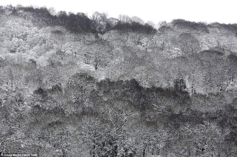 Pretty: This was an extraordinary view of the Peak District near Matlock, Derbyshire, as the picturesque area was covered in weekend snowfall