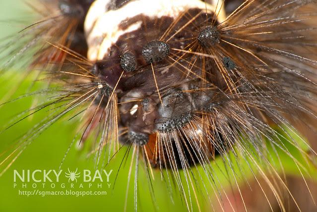 Caterpillar - DSC_0865