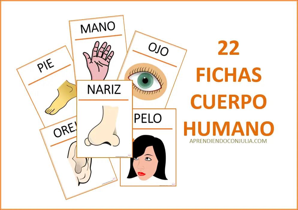 Cuerpo Humano Fichas Y Tarjetas Para Imprimir Aprendiendo Con Julia